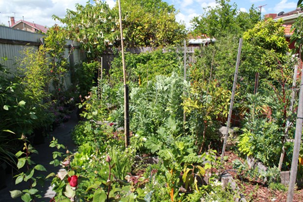 Backyard Permaculture Gardening Australia : Angelo provided a detailed description on how the garden was